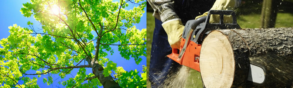 Tree Services Wheat Ridge